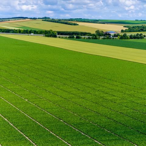 Agriculture de précision. Le drone au service du phénotypage haut débit.