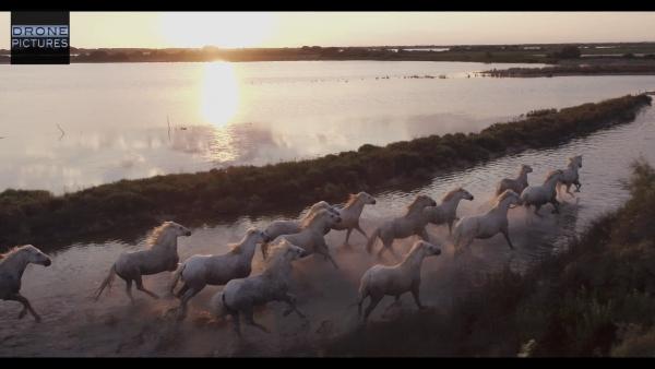 Galop Horses